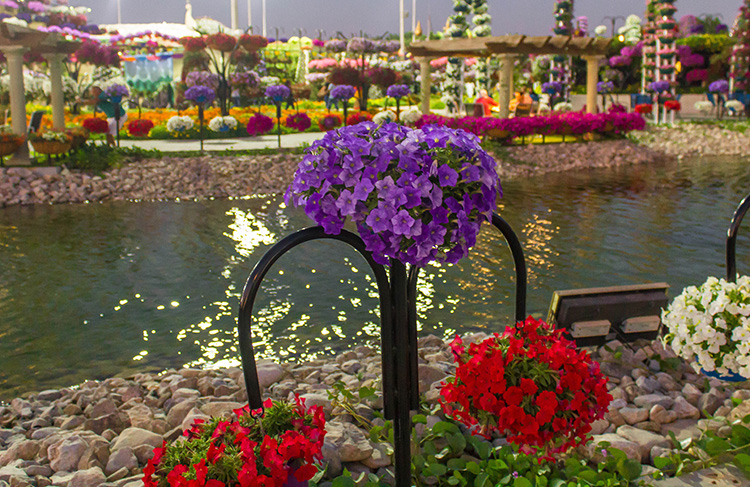 Beautiful flowers by a small stream at Dubai Miracle Garden