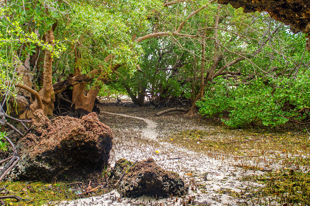 One of the paths leading to the Mangrove forest in Chale Island