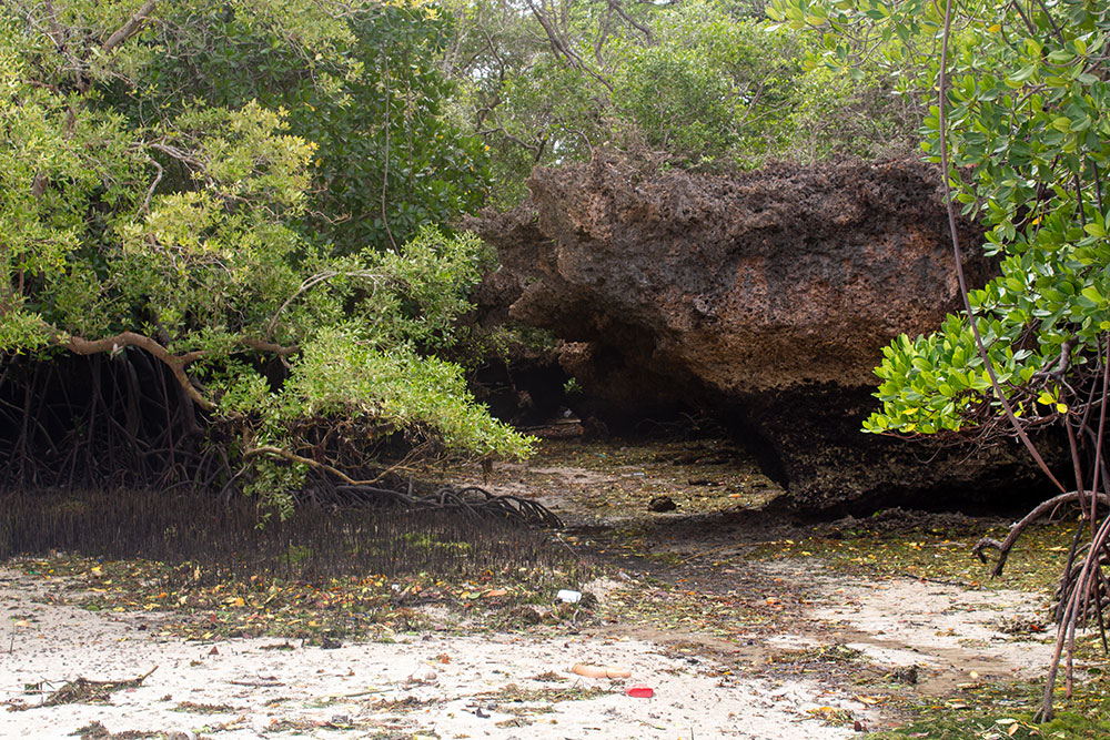 Another path leading into the Mangrove forest at Chale Island